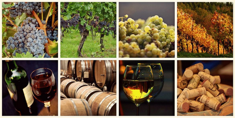 Vers un regain annoncé des vins bordelais ?