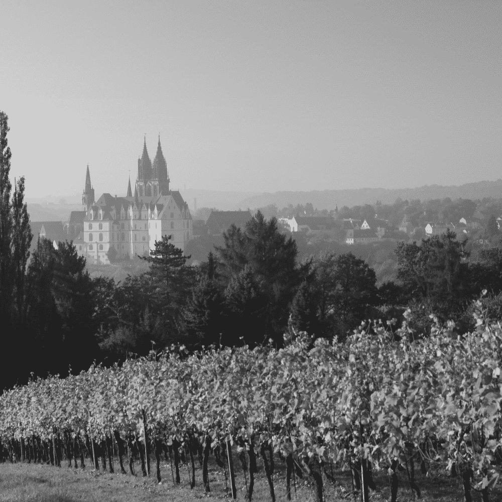 Paysage de vignes avec domaine et chateau