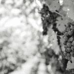 winefing-bordeaux-business-1