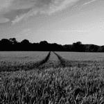 Champs de céréales soleil agriculture