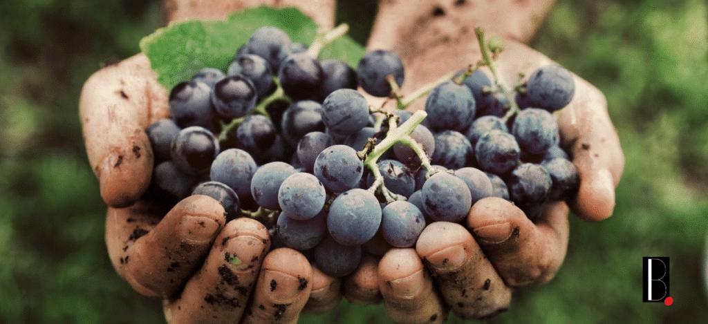 les-vins-bio-et-lagriculture-bio-affirment-leur-croissance-en-nouvelle-aquitaine-bordeaux-business