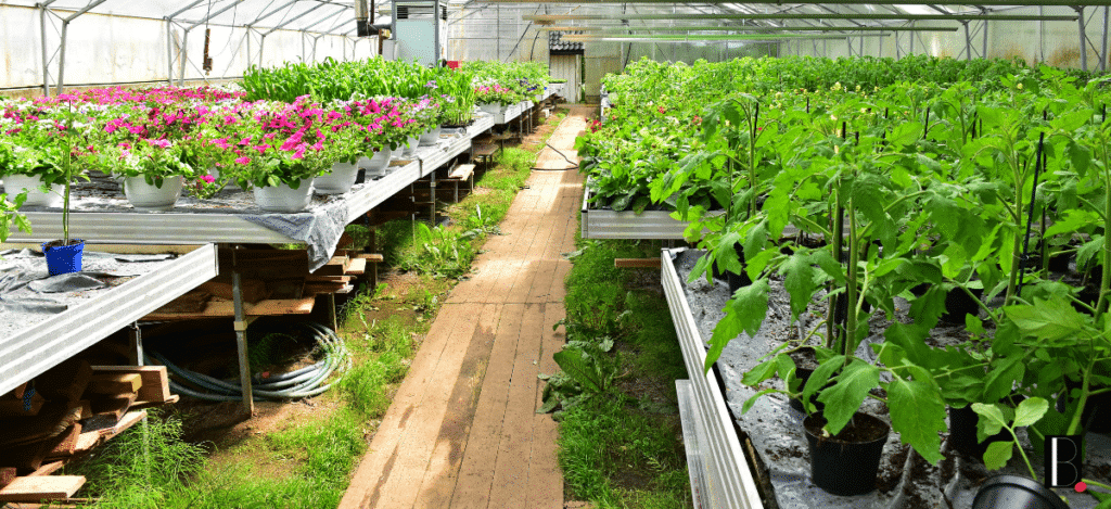 Plantes et fleurs Bordeaux Business