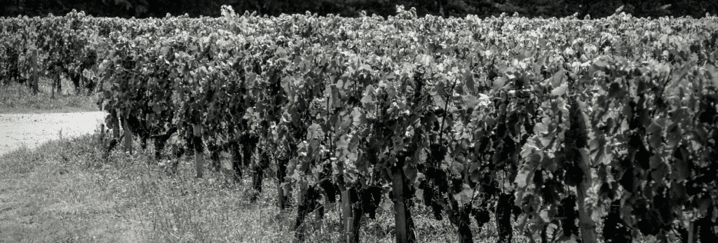 vignoble vignes Bordeaux Business