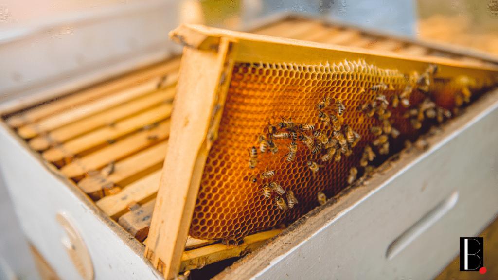 ruche abeille environnement ville