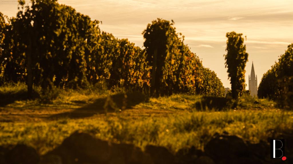 vins de bordeaux vignobles