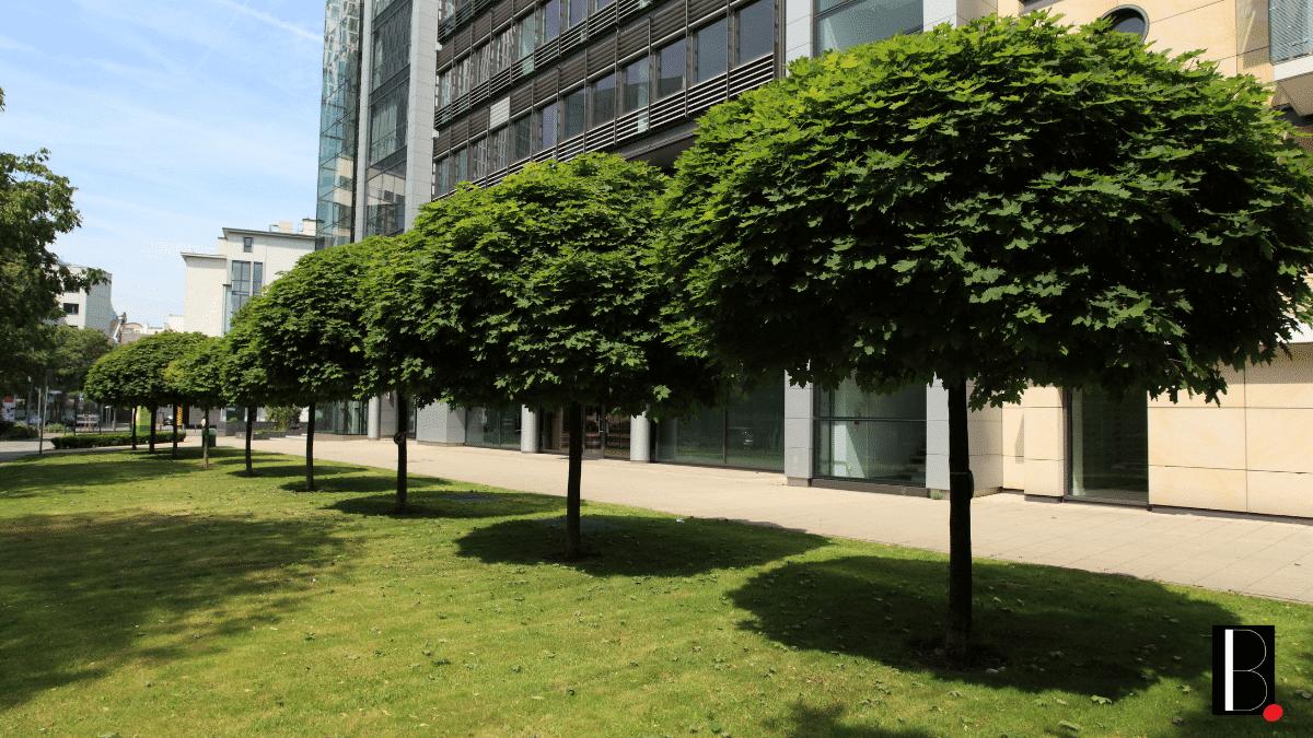 Nature arbres immeubles