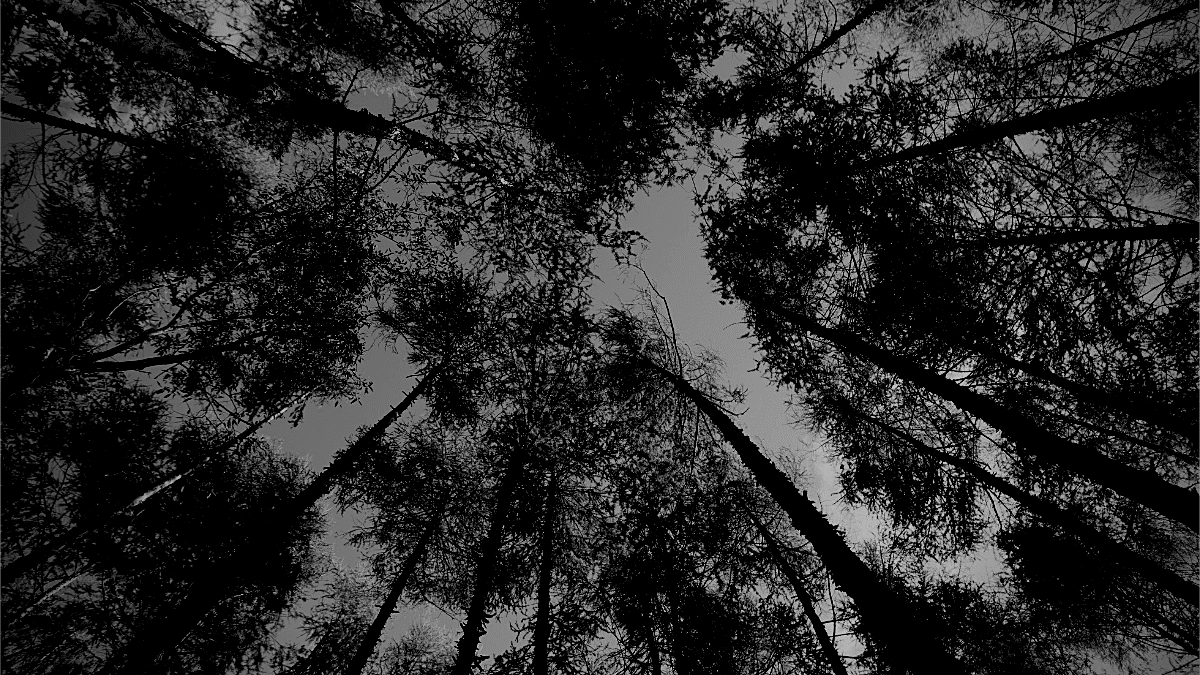 organisations interprofessionnelles foret arbres pins