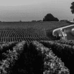 Vignes Bordelaises Bordeaux Business
