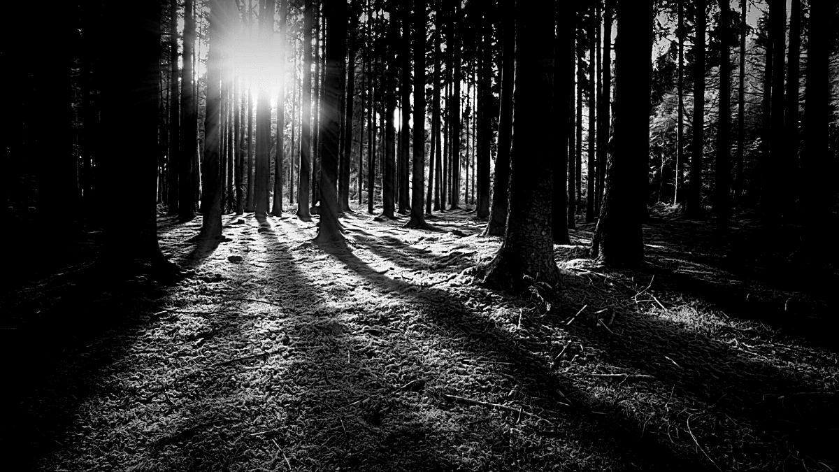 Forêt d'arbres Slow Tourisme BORDEAUX Business