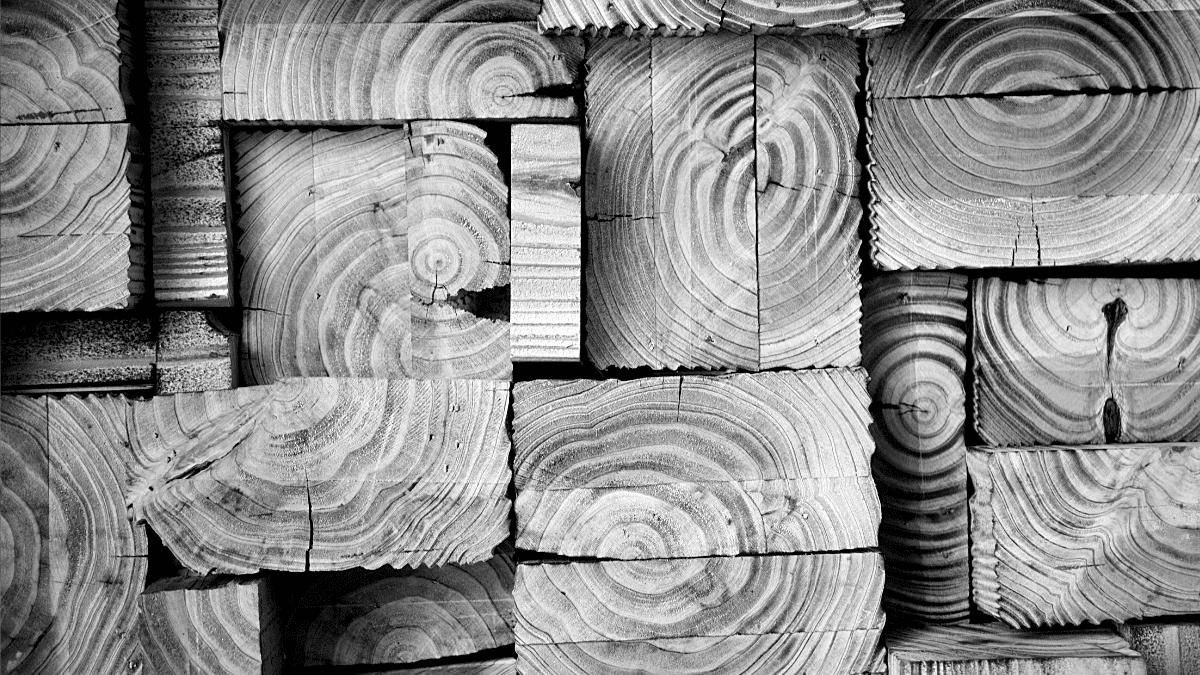 Bois planches pour construction