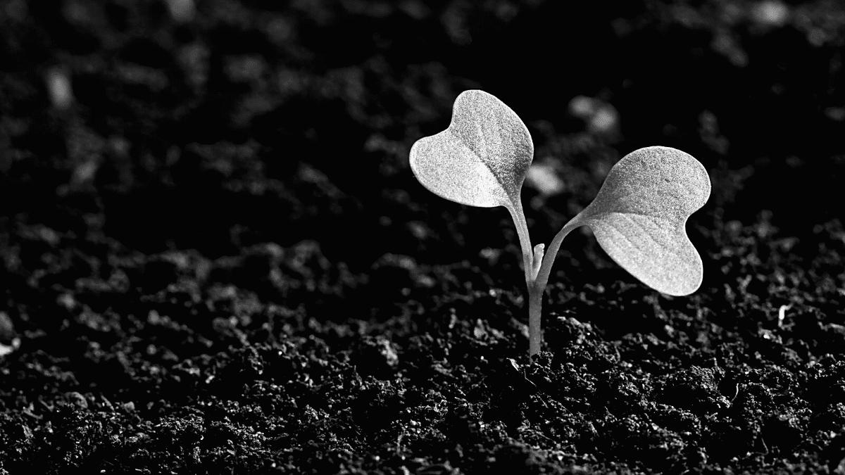 Agriculture plante terre croissance