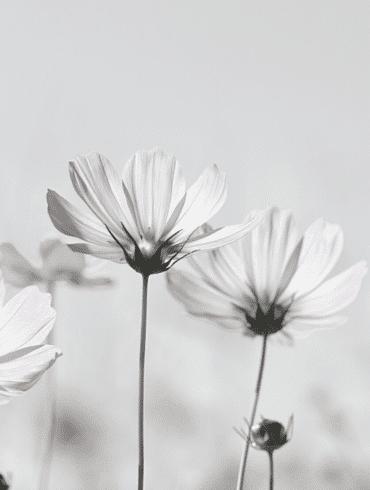 watercolor bouquet flowers