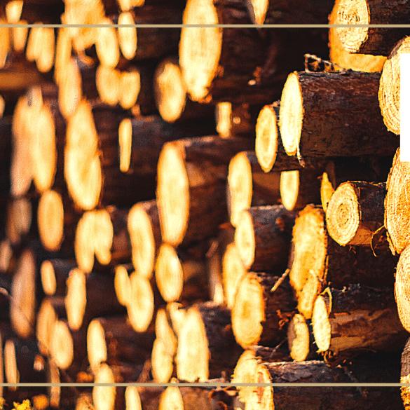 Filière bois rondins construction