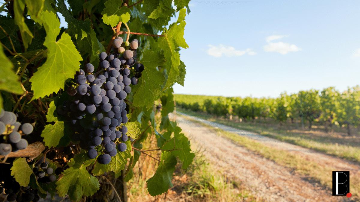 Vignobles Bordeaux innovation métier