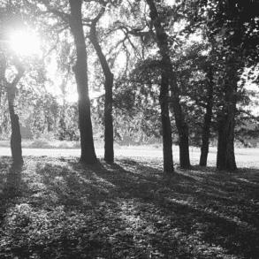 parc sallegourde talence faune et flore