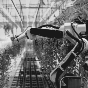 Robotique agriculture secteur