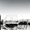 Vins verres bouteille viticole