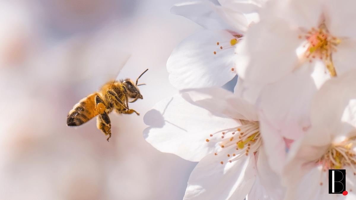 Truffaut abeille engagements actions