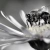 Truffaut bee plants commitments