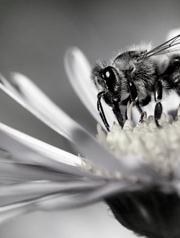 Truffaut abeille plantes engagements