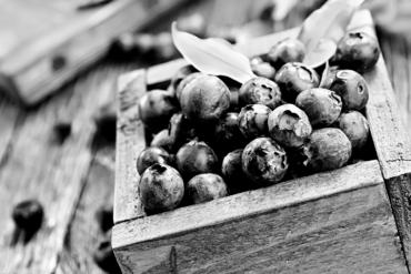 Agriculture Myrtilles Bio Nouvelle Aquitaine