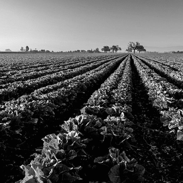 Petits producteurs exploitation agricole
